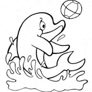 дельфин и мяч