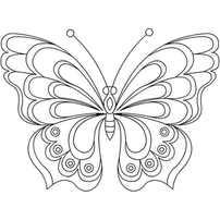 бабочка сложная