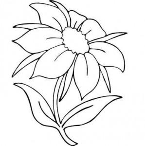Цветной рисунок простого цветка
