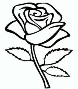 открытка 8 роза